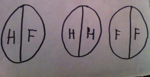 Les trois types d'êtres créés par Zeus : tous avaient 2 têtes, les deux  sexes, 4 bras et 4 jambes. Schéma de Marguerite Champeaux-Rousselot